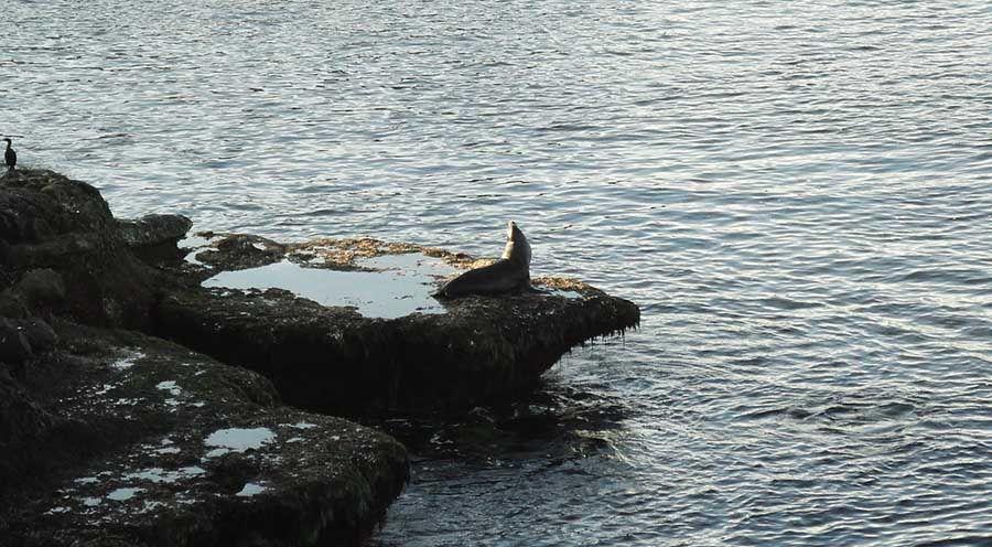 Leones marinos Costa Oeste EEUU - Tusguiasdeviaje