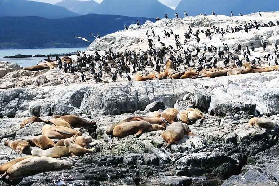 Que ver en Usuahia - Isla de los Lobos - Argentina - Tusguiasdeviaje