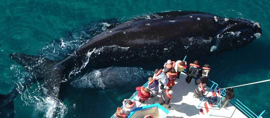 Excursion ver ballenas en Puerto Madryn - Tusguiasdeviaje