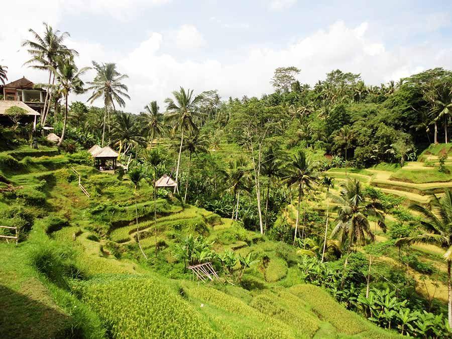 Campos de arroz en Bali - Tusguiasdeviaje