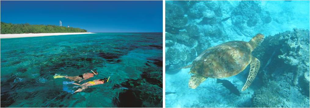 guias de viaje-sunshine coast-Lady Musgrave Islands-snorkel-bucear