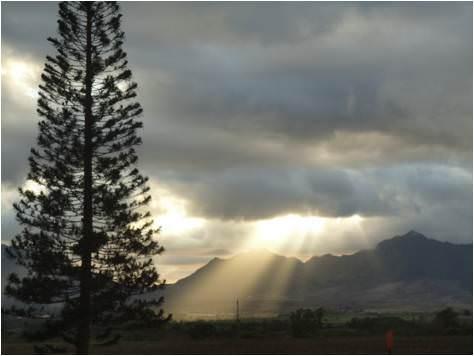 Viaje a Hawaii-Plantación de piñas Dole