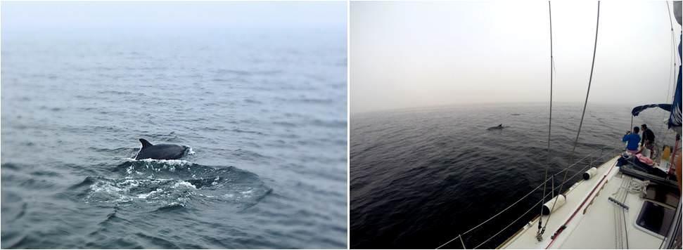 Qué ver en Vigo de turismo-Arroaces-delfines