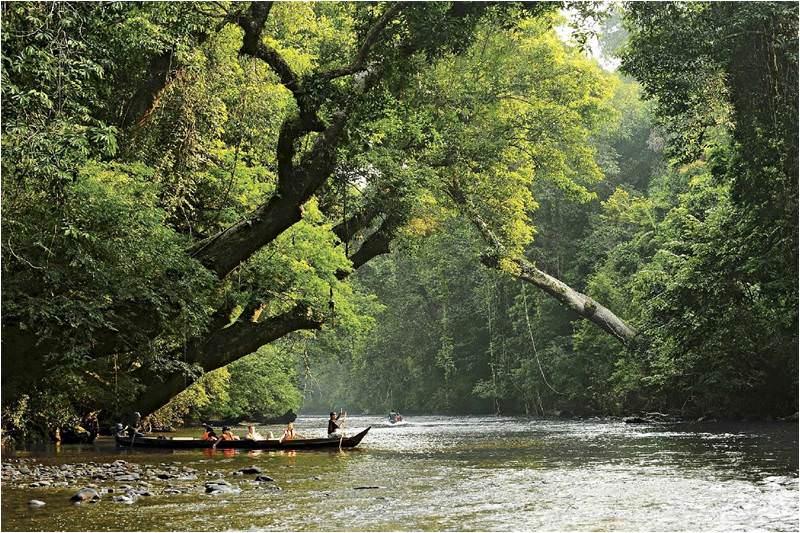 Selva taman menara en Malasia