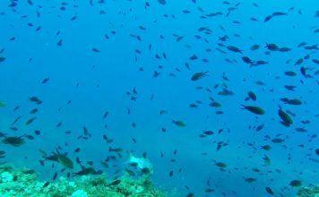 Buceo Islas Hormigas