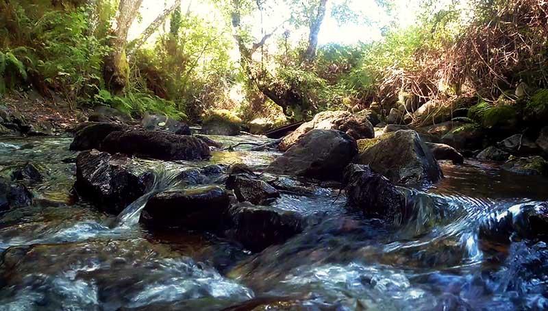 04 - Río Oza Zoom