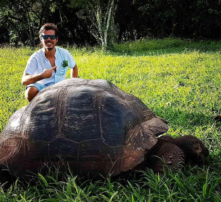 Ver tortugas gigantes en Islas Galápagos