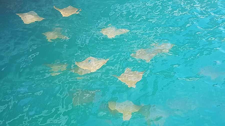 Turismo en Islas Galapagos - Que ver en Galapagos