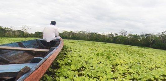 Excursión a la selva del Amazonas en Iquitos Perú