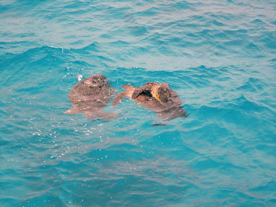 2 - Gran barrera de coral (42)K