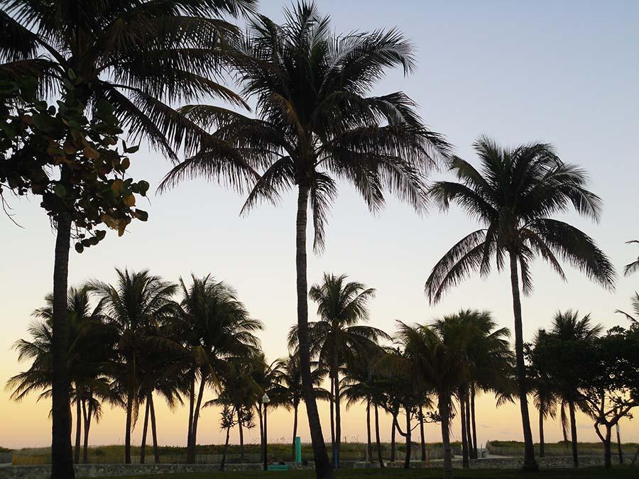 Miami (6)Q