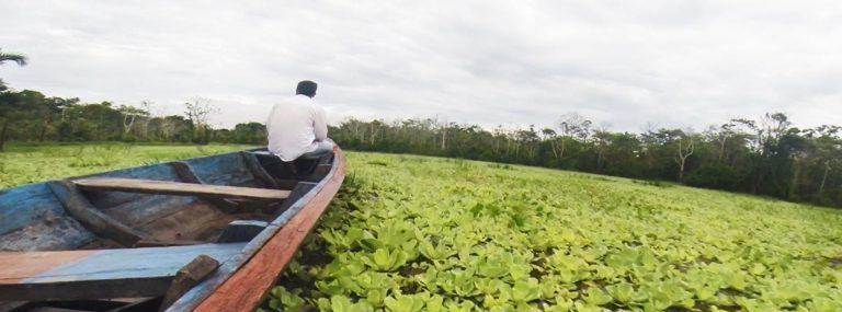 Excursión a la selva del Amazonas