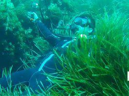 Buceo en Islas Hormigas Murcia