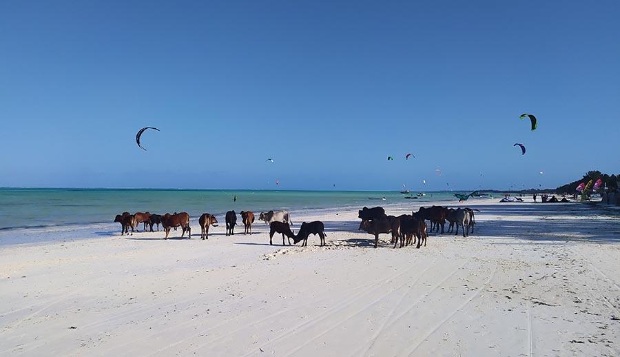 Mejores playas de Zanzibar Paje