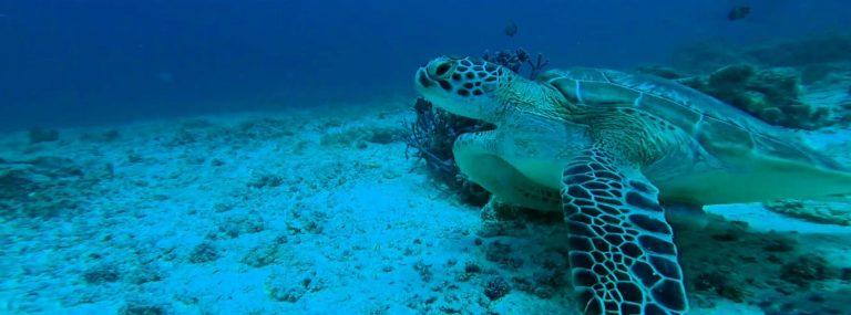Buceo en Nmemba Atoll